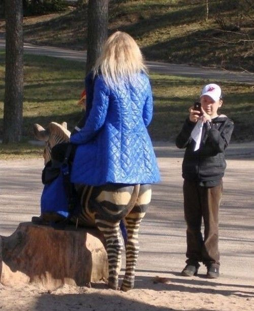 Funny Zebras Pictures Funny Zebra With Woman Picture