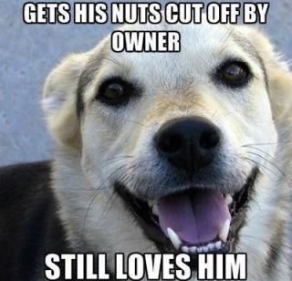 Good Guy Dog Funny Animated Dog Picture