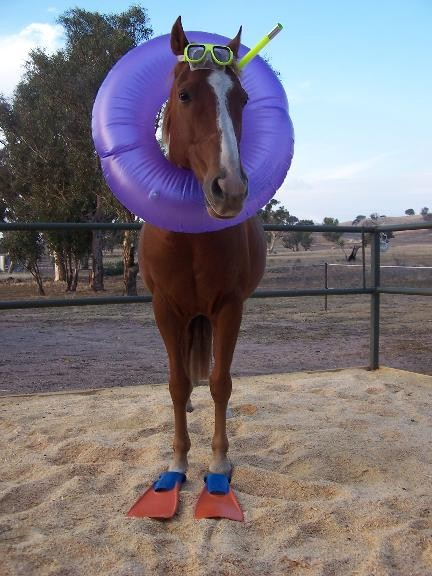 Googled seahorse and got this.. Funny Horse Image