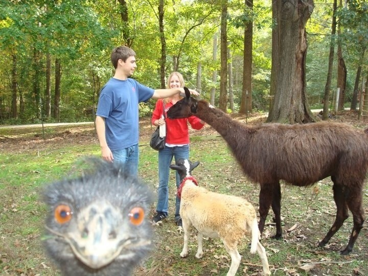 Greatest photobomb ever Funny Animal Picture