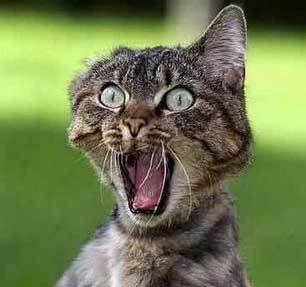 Funny Cat Horror Picture