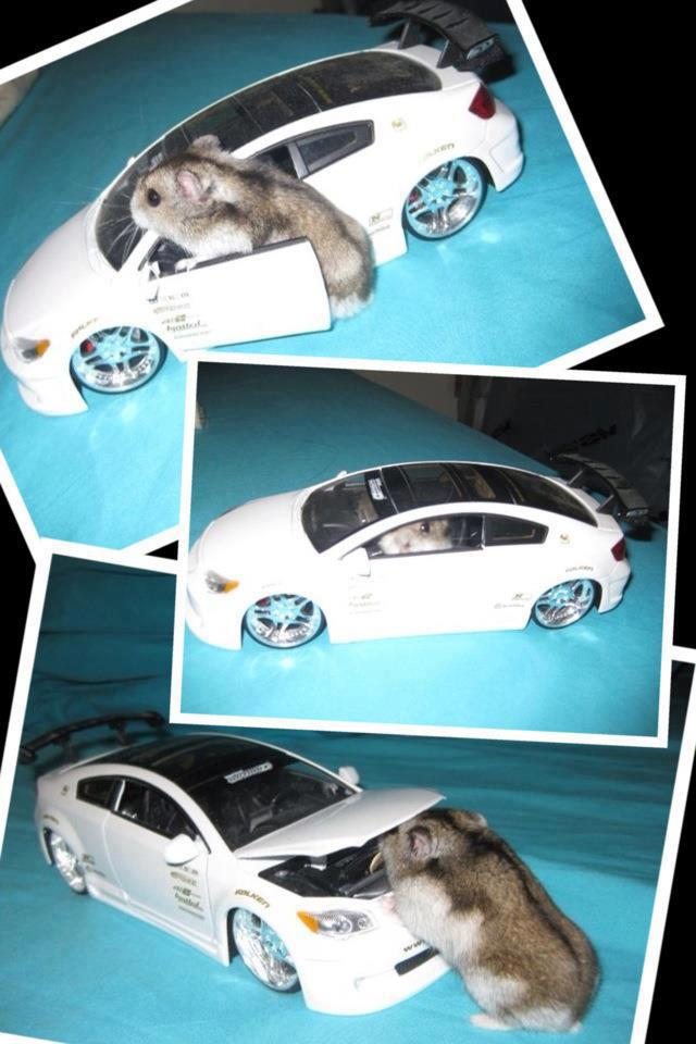 Hamster got his own ride Funny Animal Picture