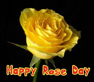 Happy Rose Day yellow Rose Picture