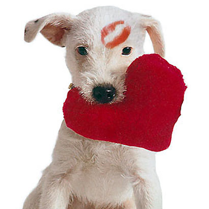 Happy Valentines Day Dog Picture