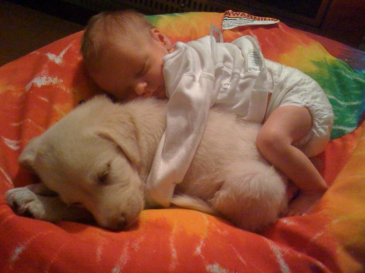 Funny Dog Picture He likes to be the small spoon
