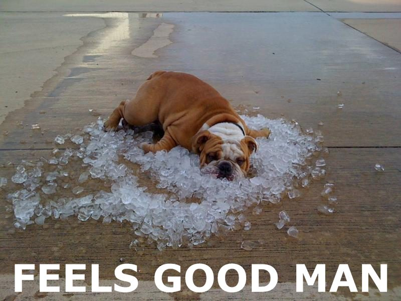 Here comes another summer of air conditioned bliss Funny Dog Picture
