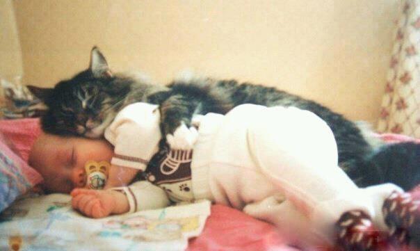 Hugz Funny Cat