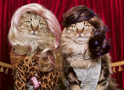 I accidentally googled haircats instead of haircuts. Funny Cat Image