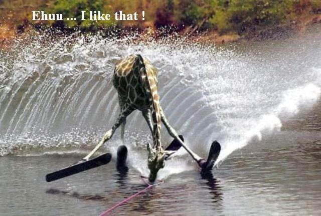 I Like That ! Funny Giraffe Picture