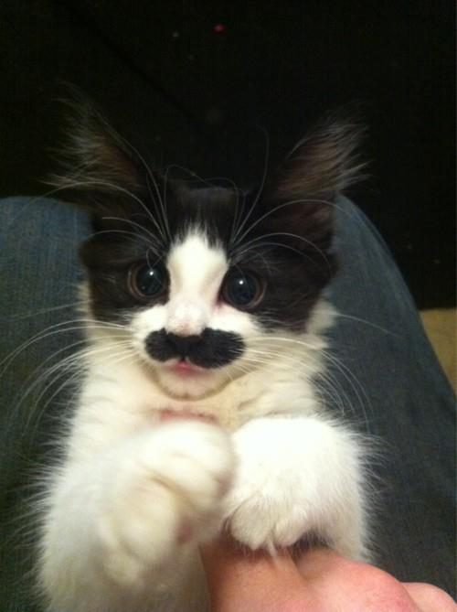 I mustache you a question.. Funny Animal Picture for Fb Share