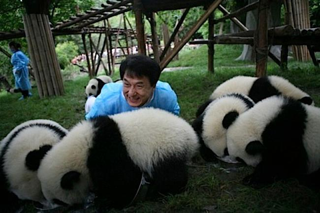 Just Jackie Chan with some pandas Funny Panda Image