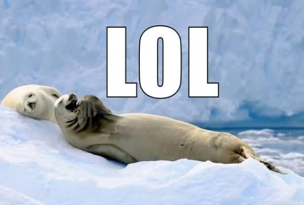 Lol Penguin Picture