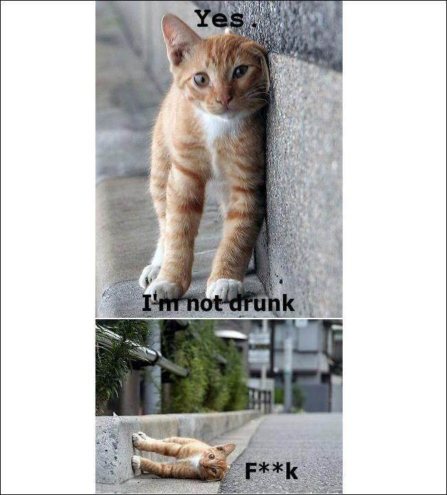 Funny Cat Picture Makes me want a cat