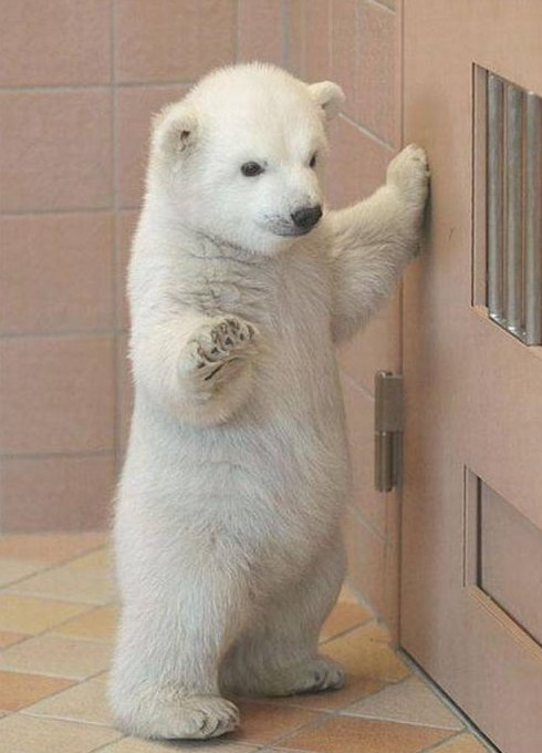 Oh hi! Funny Bear Picture