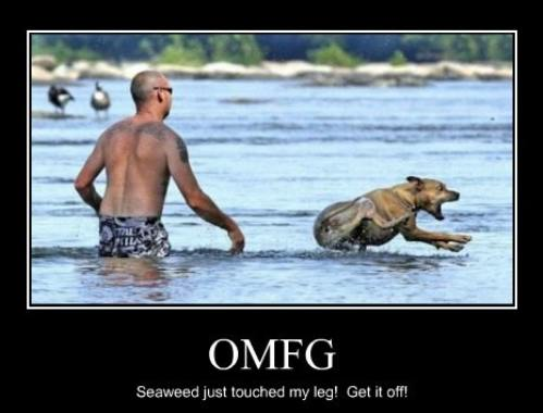 OMG Funny Dog Image for Fb Share