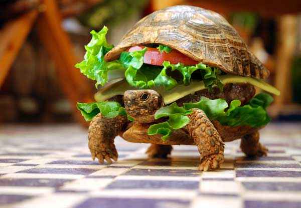 Omnomnom Funny Tortoise Picture