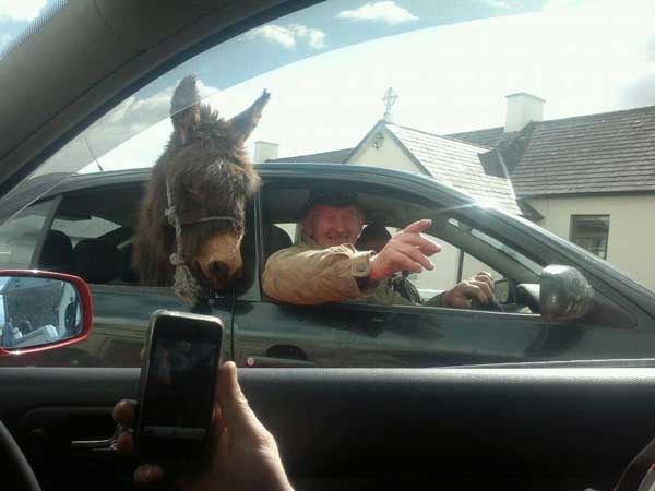 Only in Ireland Funny Animal Image