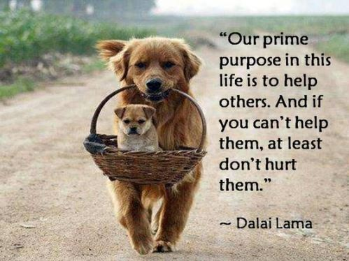 Our Prime Purpose in this Life is to Help others Funny Dog Quote