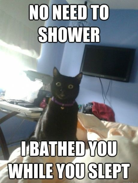 Funny Cat Picture Overly attached cat