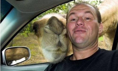 Funny Men with Camel Picture