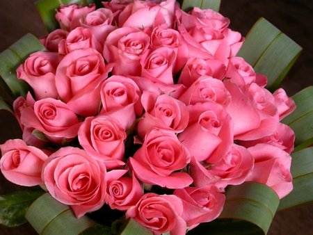 Pink Roses Big Bouquet Picture