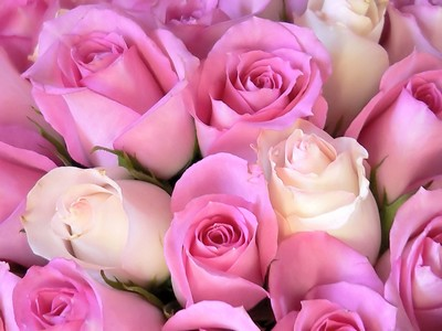 The Meanings of Pink Roses