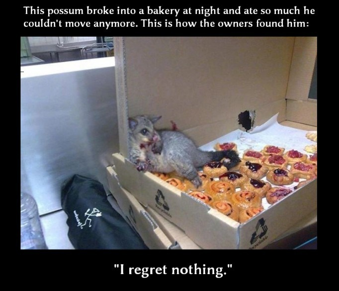 Possum dominates himself at a bakery Funny Animal Picture
