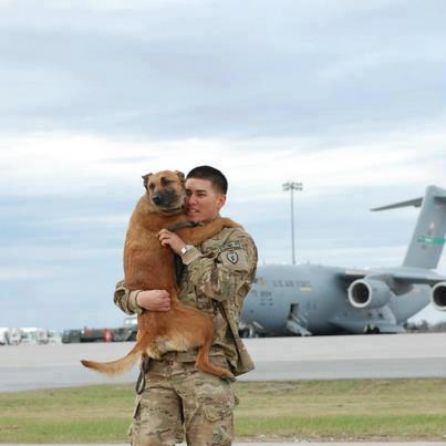 Reunited. Funny Dog with Army Officer image