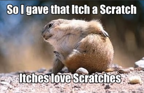 Scratches Funny Animal Graphic