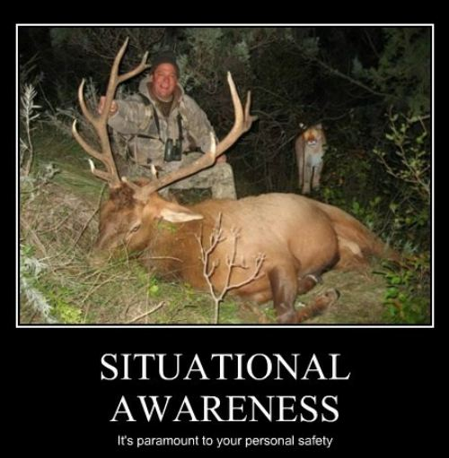 Situational awareness Funny Animal Image