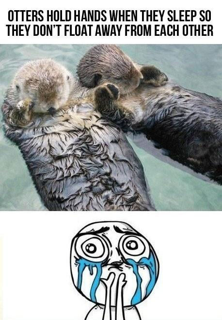 Sleeping otters Funny Animal Picture