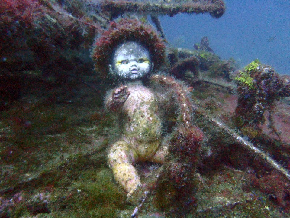 So a friend of mine found this while diving this week Funny Baby Picture