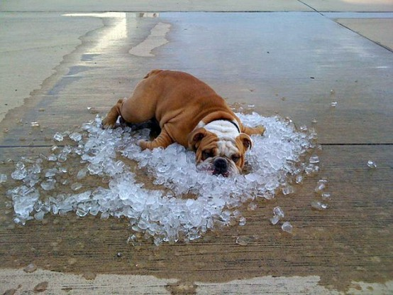 Soooooooooo HOT! Funny Dog Image for Orkut