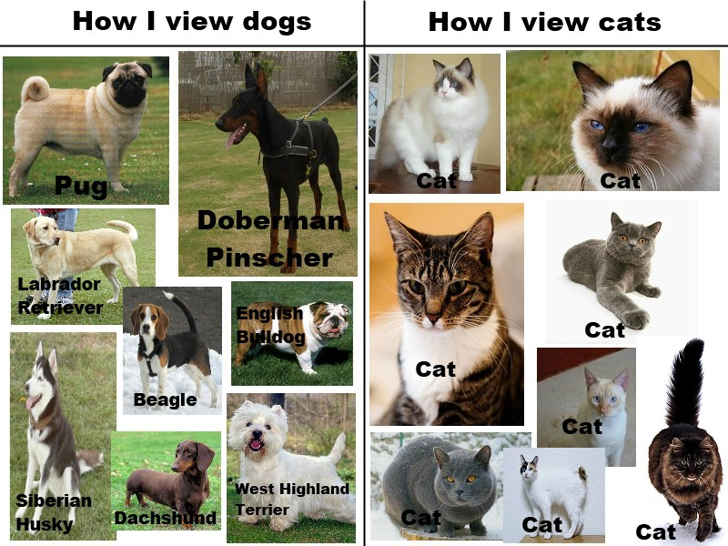 Sorry cat lovers. This is true Funny Animal Picture