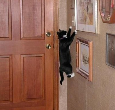 Funny Spider Black Cat Picture