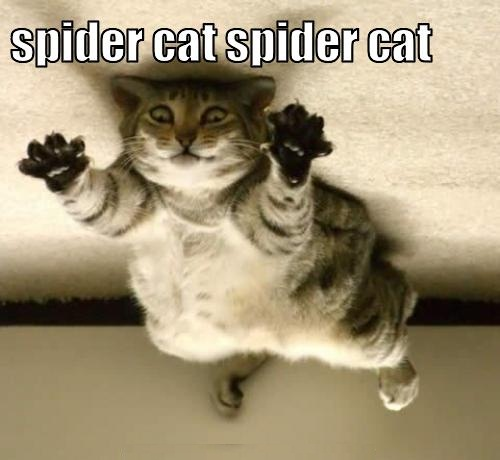 Spider Cat Image for Orkut