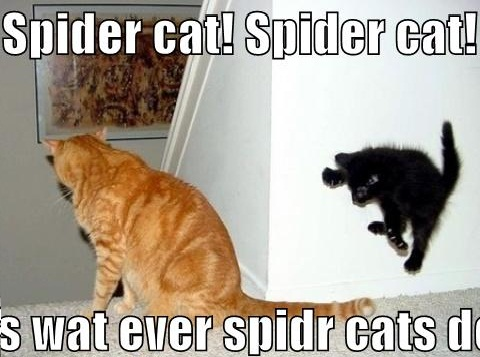 Graphics Spider Cat Funny Cats Picture