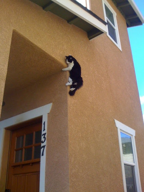 Funny Cat on the Wall