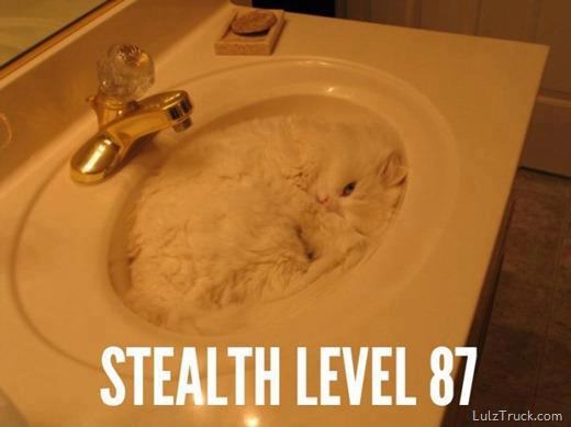 Stealth Level 87 Funny Cat Picture