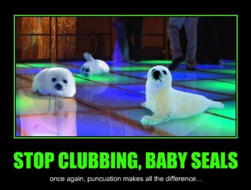 Stop clubbing, baby seals Funny Animal Picture