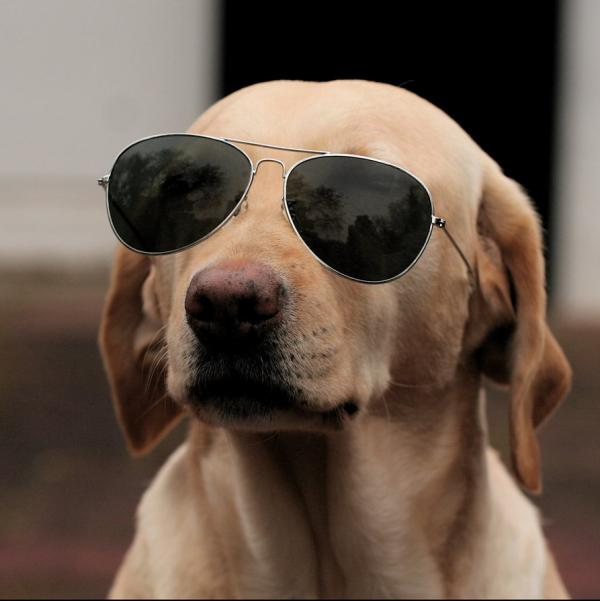 Funny Dog in Goggles