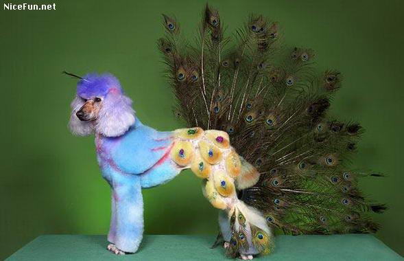 Funny Dog in Peocock Dress Image