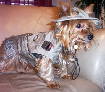 Funny Nice Dog Picture for Friendster