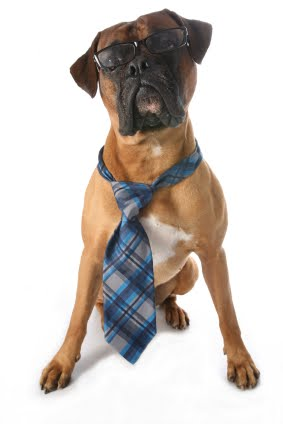 Funny Dog in Tie Picture