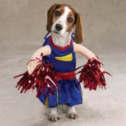 Funny Dog in Dress Picture for Facebook Sharing