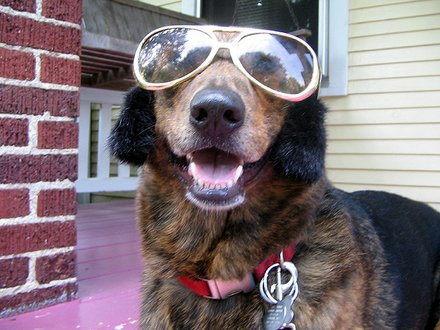 Funny Dog in Beautiful Goggles