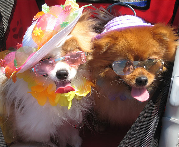 Funny Couple Dog Picture
