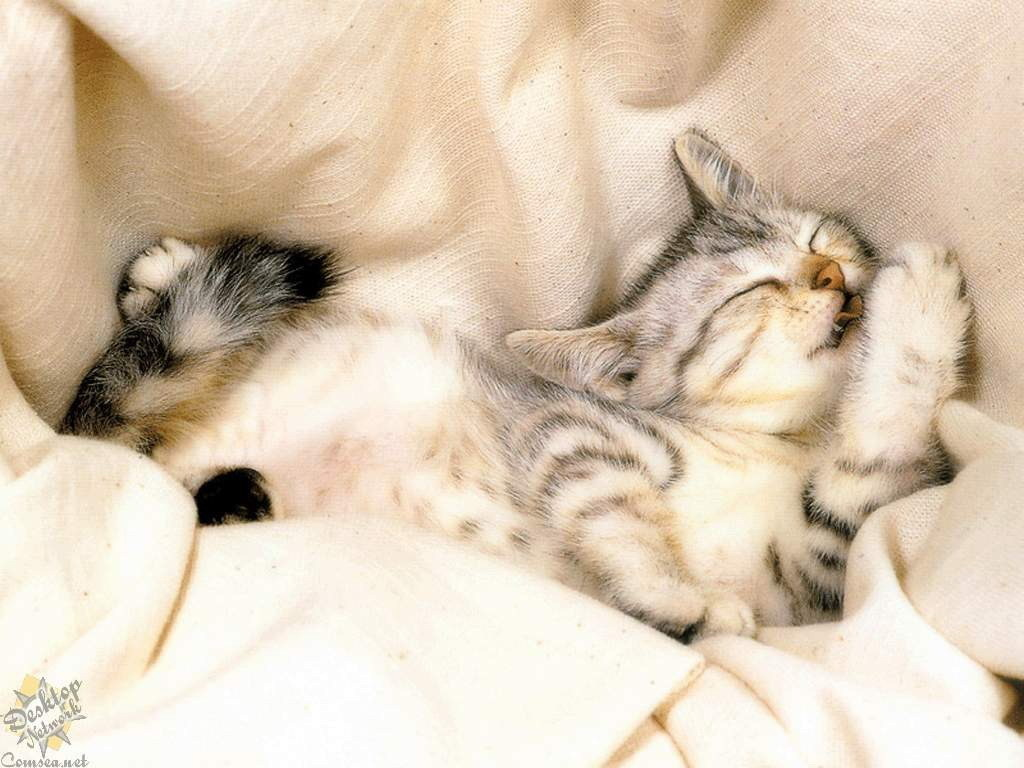 Sweet Kitty Sleeping Picture for Fb Share