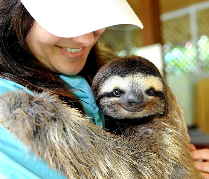 The feeling of holding a sloth Funny Animal Picture