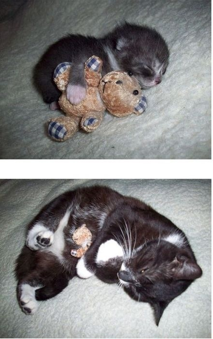 Then and Now Funny Cat Picture